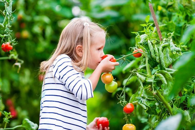 so wird dein kind viel mehr gemüse essen! - ich lebe grün!