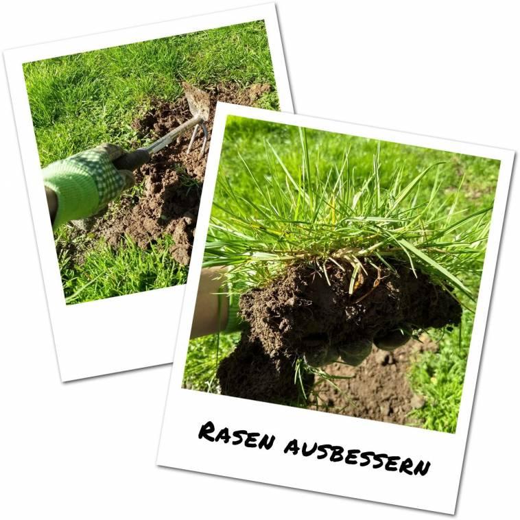 Fabelhaft Alternative Zu Rasen Referenz Von Ausbessern - Zum Samenkauf